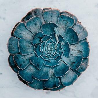 Cactus sappig op een marmeren tafel. minimalistische kunst plat leggen