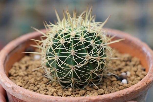 Cactus succulente installatie in de kas
