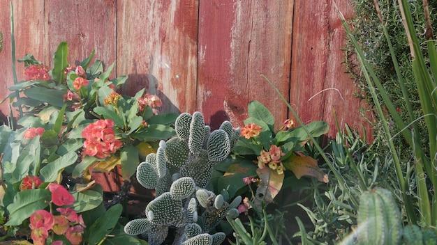 Cactus vetplant californië usa woestijn flora droog klimaat natuurlijk bloem botanisch close-up achtergrond groen sier ongebruikelijk kamerplant tuinieren in amerika groeit met aloë en agave