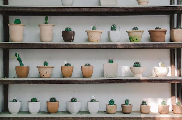 Cactusbomen op plank
