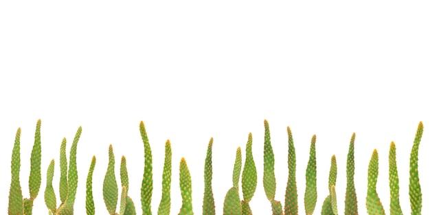 Cactusinstallaties op geïsoleerde achtergrond