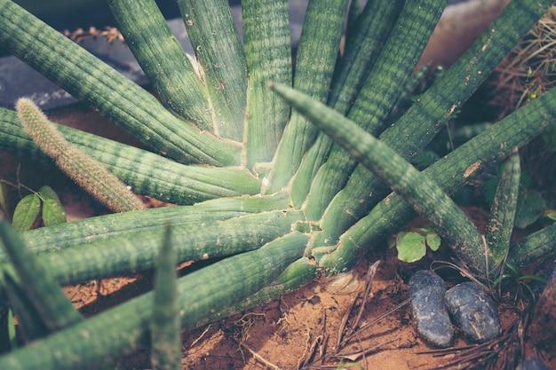 Cactuspot in koffiekoffie, uitstekend filterbeeld