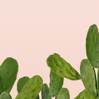 Cactusrand op roze achtergrond