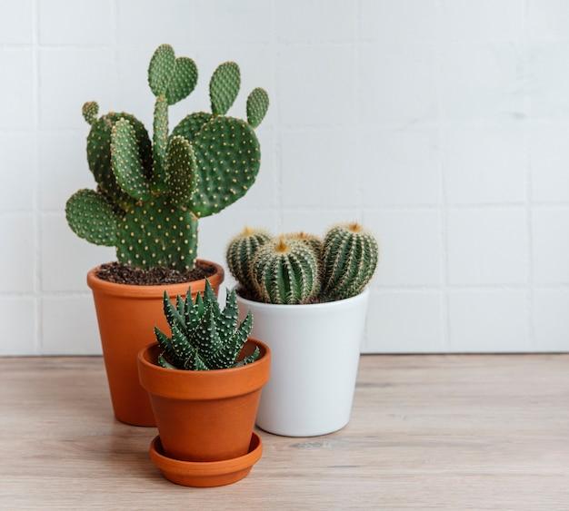 Cactussen en vetplant in potten op tafel, kamerplanten