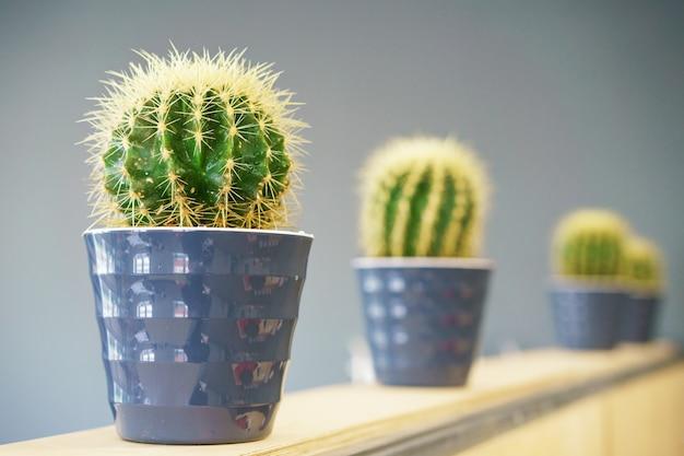 Cactussen groeien in potten, staan op een rij op de plank
