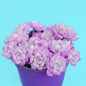 Cactussen in pot. cactus liefhebber mode creatief concept
