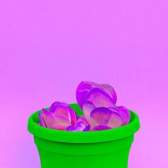 Cactussen in pot. cactus minnaar mode kleurrijk creatief concept
