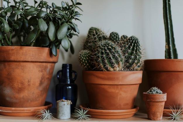 Cactussen in potten van bruine klei