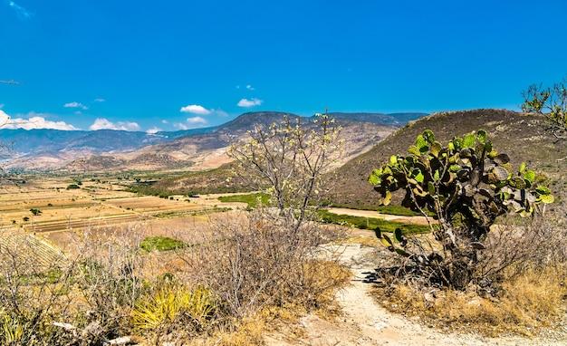 Cactussen op de archeologische vindplaats yagul in de staat oaxaca in mexico