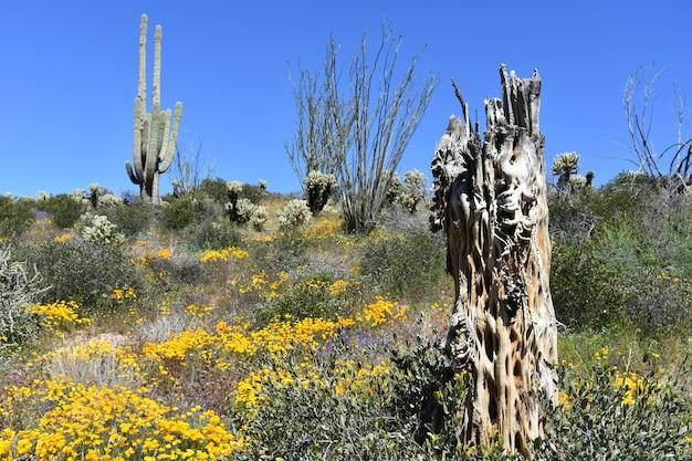 Cactussen op de heuvels bedekt met groen onder de blauwe lucht