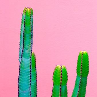 Cactussen op de roze muur. planten op roze mode-idee