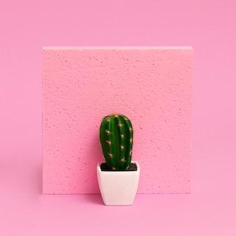 Cactussen voor in huis. planten op roze concept