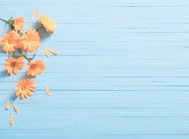 Calendula bloemen op blauwe houten tafel