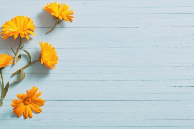 Calendula bloemen op blauwe houten