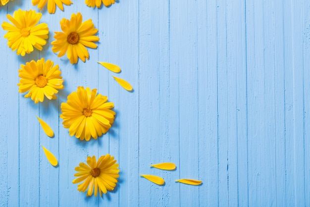 Calendulabloemen op blauwe houten achtergrond
