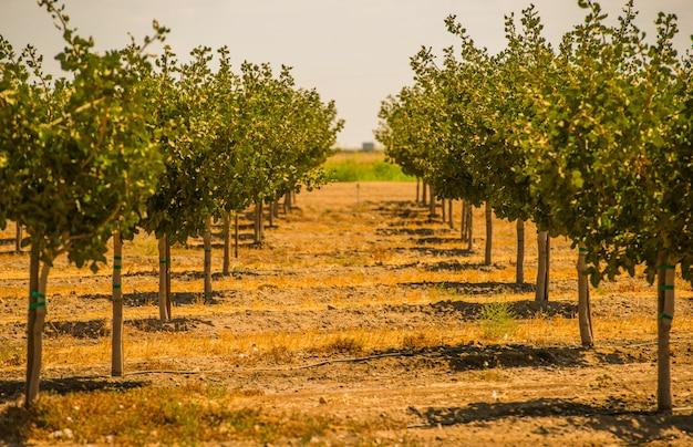 Californië boomgaarden