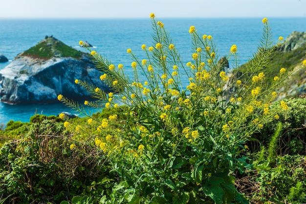 Californië kust bloemen