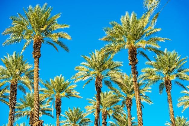 Californië palmen