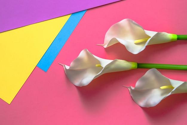 Callas op vierkleuren effen gele, roze, violette en lichtblauwe achtergrond.