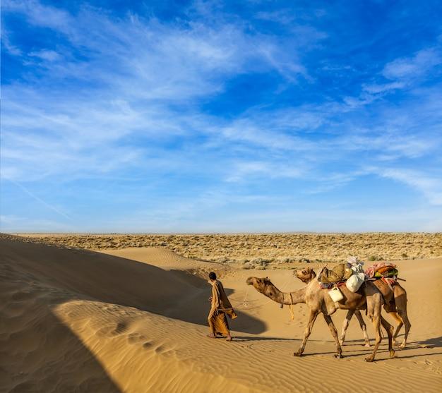 Cameleer (kameel chauffeur) met kamelen in de duinen van de thar woestijn. raj