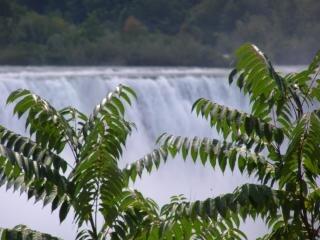 Canada - niagara falls - water - bomen