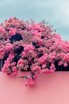 Canarisch eiland. kanarische natuur. bloemen. concept art voor reizen