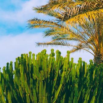 Canarisch eiland. reizen concept art. natuur