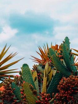 Canarische cactusboom. reisconcept.