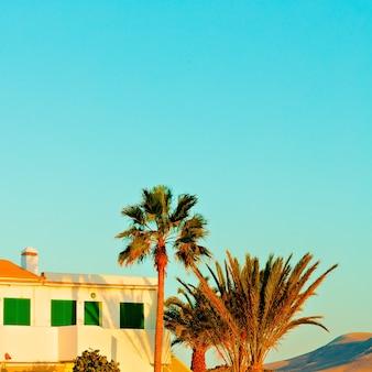 Canarische eilanden. minimaal. palmen. zonsondergang sfeer
