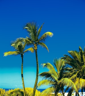 Canarische eilanden. paradijs. tropisch minimaal