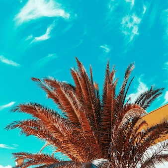 Canarische eilanden planten esthetiek cactus palm en tropisch platteland landschap stijlvol reizen a