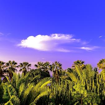 Canarische eilanden tenerife palmen en groene achtergrond minimaal