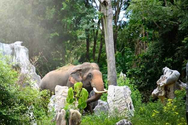 Candid foto van de olifant in de jungle van thailand