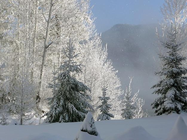 Canim lake winter mistige vroege ochtend