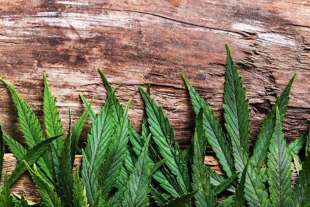 Cannabis bladplant