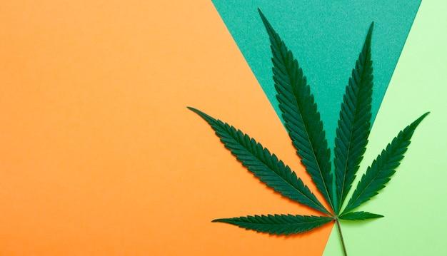 Cannabis bovenaanzicht op kleurrijk papier