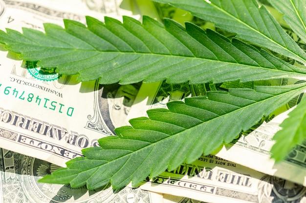 Cannabisblad en geld