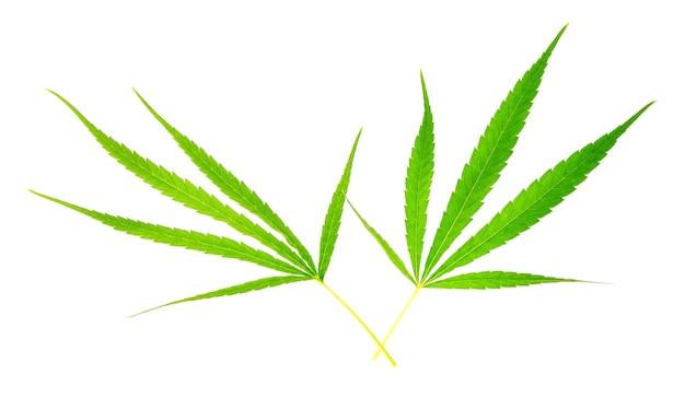 Cannabisblad op wit wordt geïsoleerd dat