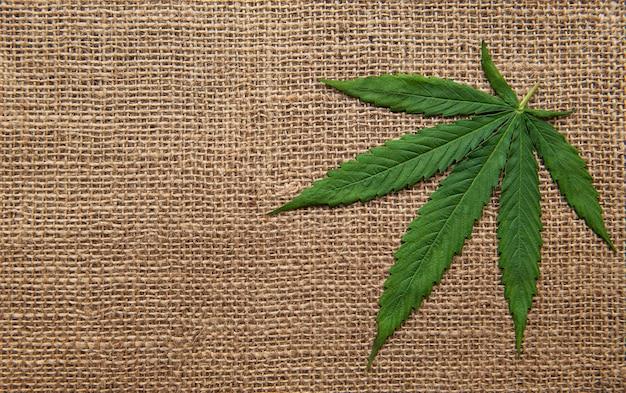 Cannabisbladeren op de achtergrond van grove hennepstof