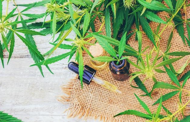 Cannabiskruid en bladeren voor behandelingsvloeistof, tinctuur, uittreksel, olie. selectieve aandacht.