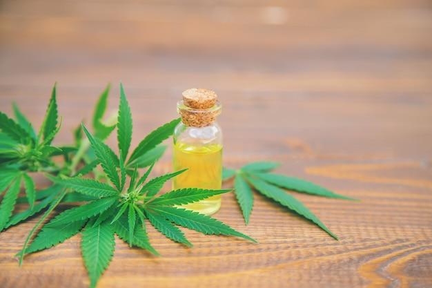 Cannabiskruid en bladeren voor de behandeling van bouillon, tinctuur, extract, olie.