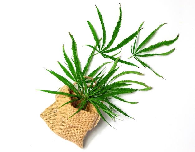 Cannabisolie-pil-medicijn in de medische industrie voor een goede gezondheidsindustrie