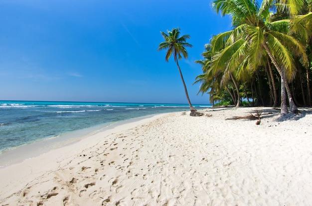 Caraïbisch strand en palmboom. paradijs. vakantie en toerisme concept.