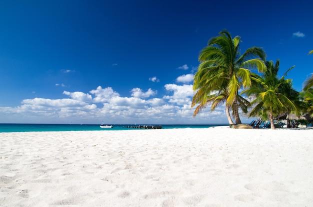 Caraïbisch strand en palmboom. paradijs. zomer vakantie concept.