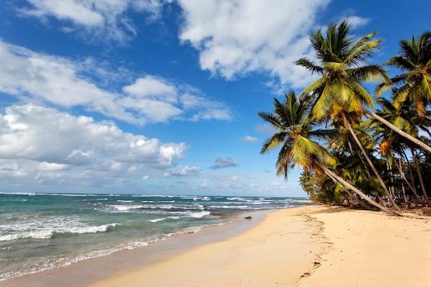 Caraïbisch strand met palmbomen en blauwe hemel