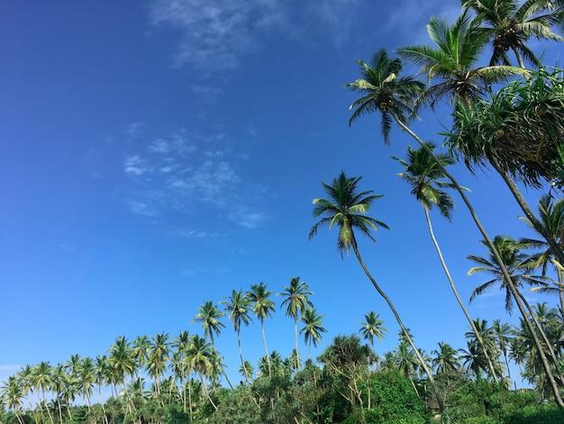Caraïbische zee en kokospalm op blauwe hemel