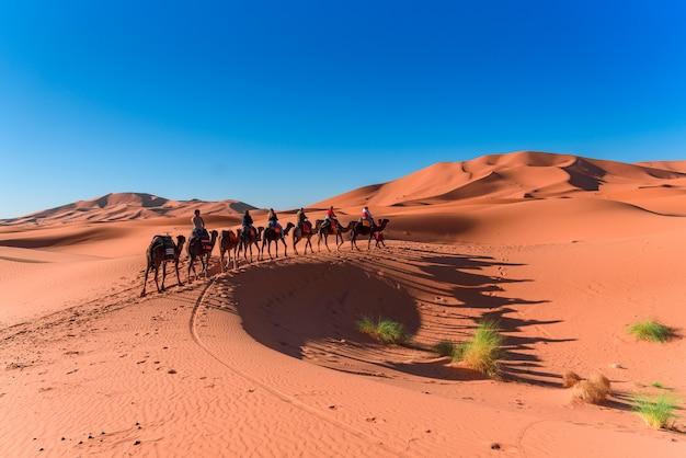 Caravan die in de woestijn van de sahara merzouga op marokko loopt
