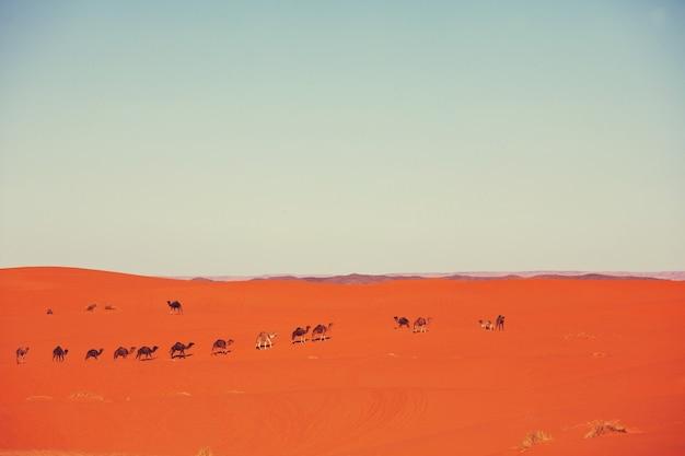 Caravan in de saharawoestijn