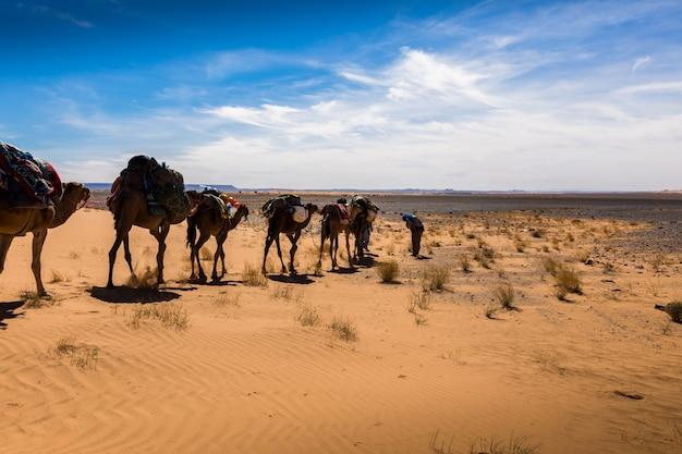 Caravan van kamelen in de sahara woestijn