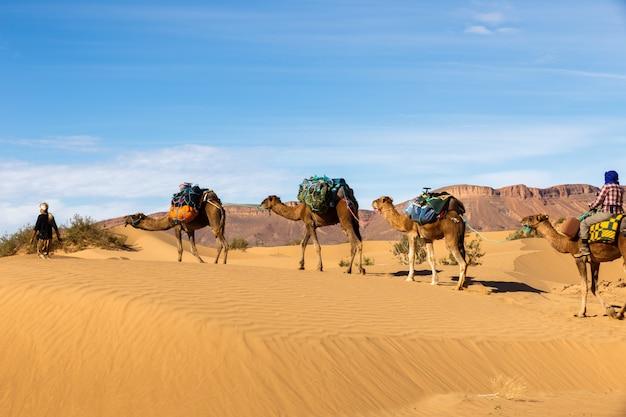 Caravan van kamelen in de woestijn